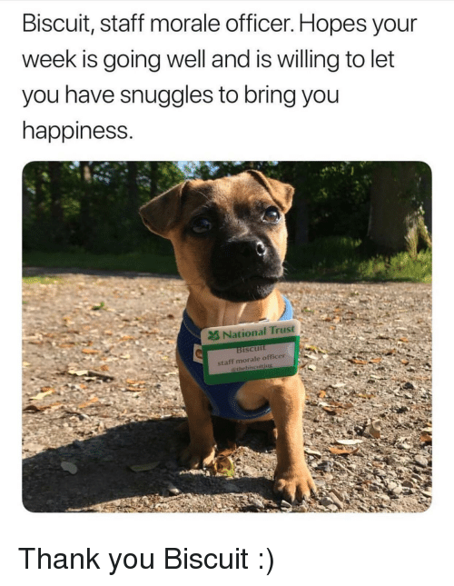 snuggles: Biscuit, staft morale officer. Hopes your  week is going well and is willing to let  you have snuggles to bring you  happiness.  2& National Trust  ISCUIt <p>Thank you Biscuit :)</p>