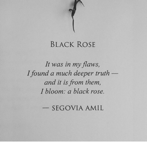 black rose: BLACK ROSE  It was in my flaws,  and it is from them  I found a much deeper truth  I bloom: a black rose.  SEGOVIA AMIL