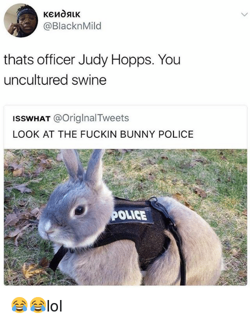 25 Best Memes About Bunny Bunny Memes Etymology (/ˌɛtɪˈmɒlədʒi/) is the study of the history of words. awwmemes com