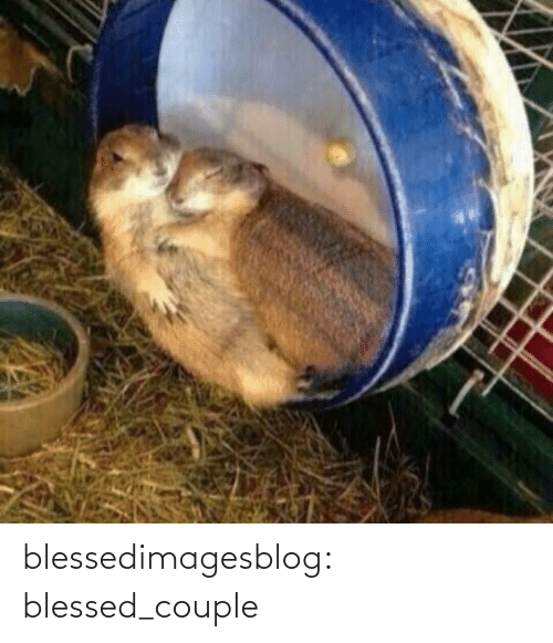 couple: blessedimagesblog:  blessed_couple