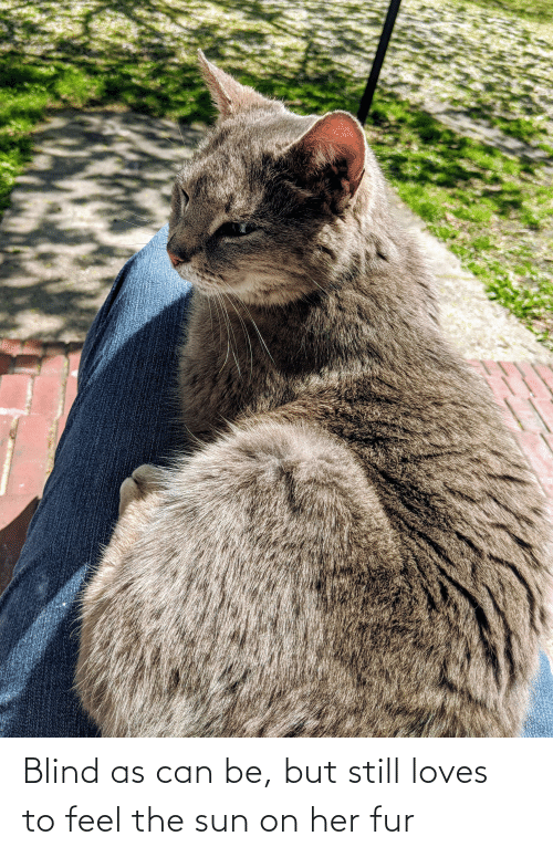 fur: Blind as can be, but still loves to feel the sun on her fur