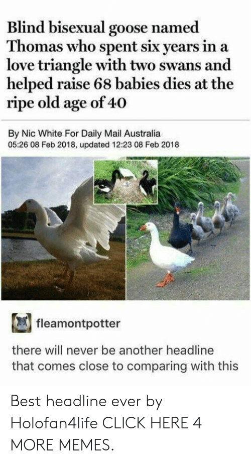 Feb 2018: Blind bisexual goose named  Thomas who spent six years in  love triangle with two swans and  helped raise 68 babies dies at the  ripe old age of 40  By Nic White For Daily Mail Australia  05:26 08 Feb 2018, updated 12:23 08 Feb 2018  fleamontpotter  there will never be another headline  that comes close to comparing with this Best headline ever by Holofan4life CLICK HERE 4 MORE MEMES.