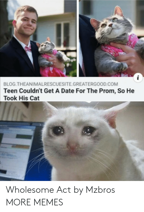 prom: BLOG.THEANIMALRESCUESITE.GREATERGOOD.COM  Teen Couldn't Get A Date For The Prom, So He  Took His Cat Wholesome Act by Mzbros MORE MEMES