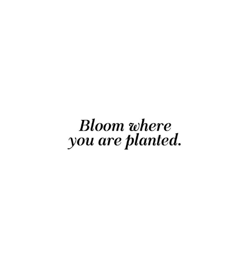 bloom: Bloom where  you are planted.