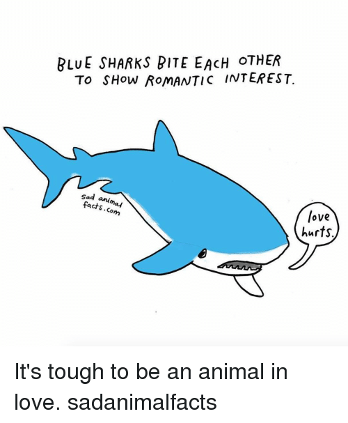 Memes, 🤖, and Rom: BLUE SHARKS BITE EACH OTHER  To SHow Rom  INTEREST.  Sad  anim  facts  may  love  hurts It's tough to be an animal in love. sadanimalfacts