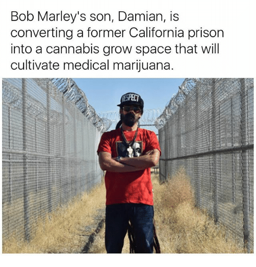 cultivate: Bob Marley's son, Damian, is  converting a former California prison  into a cannabis grow space that will  cultivate medical marijuana.  SPECT