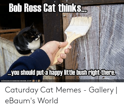 Caturday Cat: Bob Ross Cat thinksu.  you should put a happy little bush right there Caturday Cat Memes - Gallery | eBaum's World