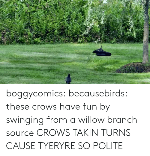 willow: boggycomics:  becausebirds:  these crows have fun by swinging from a willow branch  source  CROWS TAKIN TURNS CAUSE TYERYRE SO POLITE