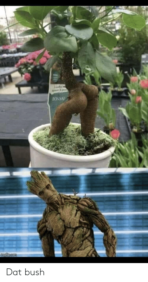 Bonsai, Bush, and Dat: BONSAI Dat bush