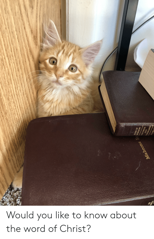 Book, Word, and Mormon: BOOK OF  MORMON  DOCTRINE  ONY  Maheone S  EARI Would you like to know about the word of Christ?