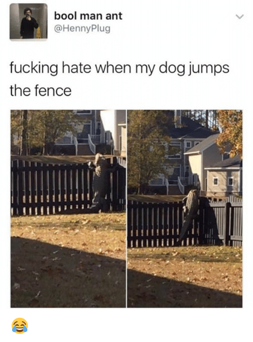 Bool: bool man ant  @Henny Plug  fucking hate when my dog jumps  the fence 😂