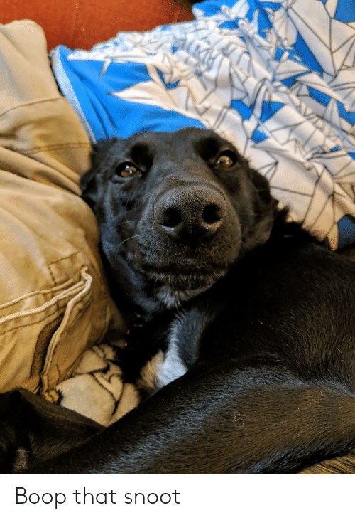Boop, Snoot, and That: Boop that snoot