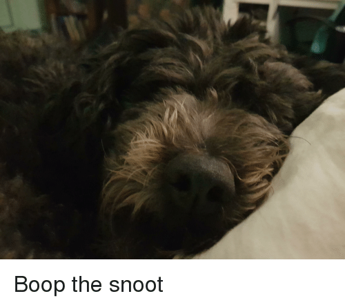Boop, Snoot, and The
