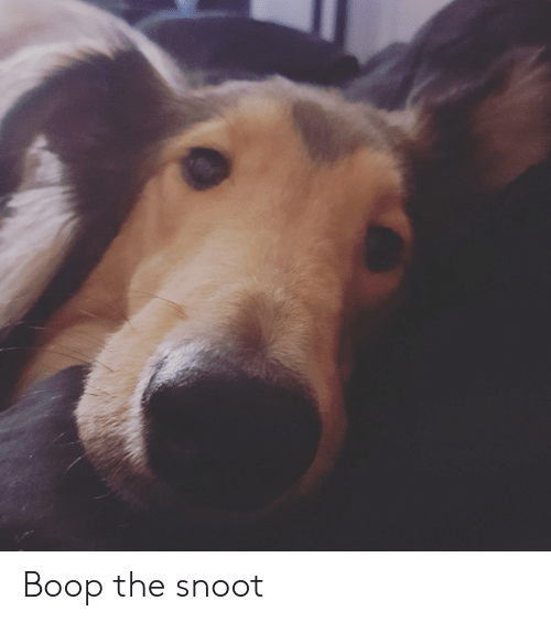 Boop, Snoot, and The: Boop the snoot
