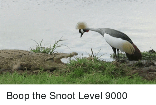 Boop, Level, and Snoot: Boop the Snoot Level 9000