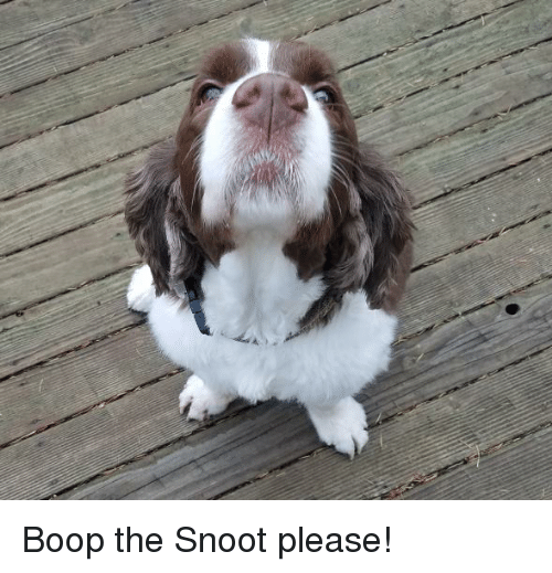 Boop, Please, and Snoot