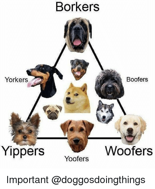 Dank Memes and Important: Borkers  Boofers  Yorkers  Yippers Yoofers  Woofers Important @doggosdoingthings