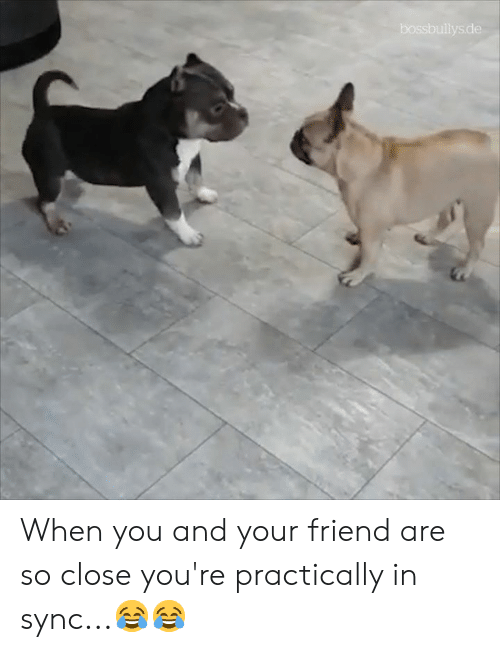 practically: bossbullys.de When you and your friend are so close you're practically in sync...😂😂