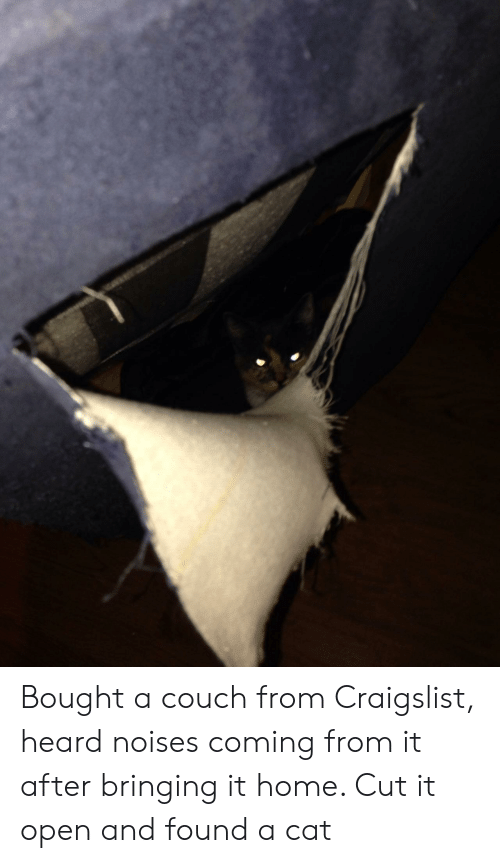 Craigslist: Bought a couch from Craigslist, heard noises coming from it after bringing it home. Cut it open and found a cat