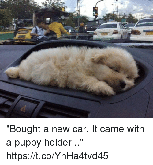 "Funny, Awkward, and Puppy: ""Bought a new car. It came with a puppy holder..."" https://t.co/YnHa4tvd45"