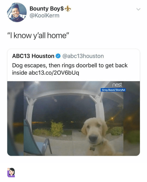 "Memes, Abc13, and Home: Bounty Boys-  @KoolKerm  ""I know y'all home""  ABC13 Houston@abc13houston  Dog escapes, then rings doorbell to get back  inside abc13.co/2OV6bUq  nest  Greg Basel/Storyful 🙋🏻‍♀️"