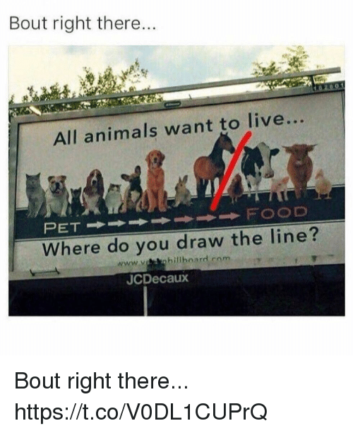 Animals, Funny, and Live: Bout right there...  All animals want to live...  Where do you draw the line?  www.veanbillboard com  JCDecaux Bout right there... https://t.co/V0DL1CUPrQ