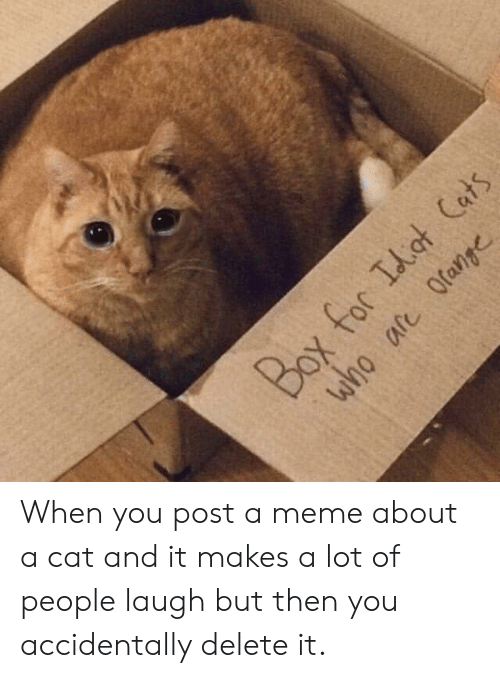 I Think Your Cats Cute My Cat | Cats Meme on awwmemes com