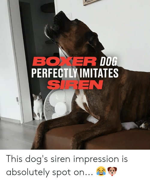 Impression: BOXER DOG  PERFECTLY IMITATES  SIREN This dog's siren impression is absolutely spot on... 😂🐶