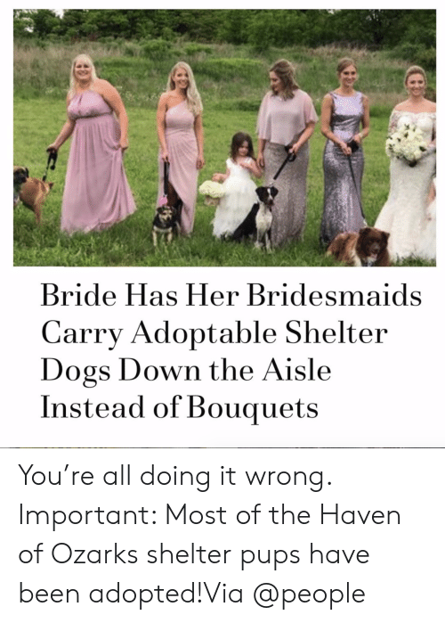 Bridesmaids: Bride Has Her Bridesmaids  Carry Adoptable Shelter  Dogs Down the Aisle  Instead of Bouquets You're all doing it wrong. Important: Most of the Haven of Ozarks shelter pups have been adopted!Via @people
