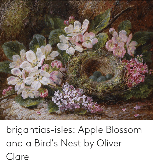 Birds: brigantias-isles:    Apple Blossom and a Bird's Nest   by Oliver Clare