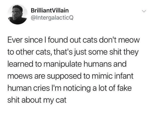 mimic: BrilliantVillain  @lntergalacticQ  Ever since l found out cats don't meow  to other cats, that's just some shit they  learned to manipulate humans and  moews are supposed to mimic infant  human cries I'm noticing a lot of fake  shit about my cat