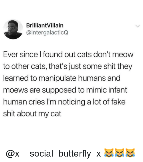 Cats, Fake, and Memes: BrilliantVillain  @lntergalacticQ  Ever since l found out cats don't meow  to other cats, that's just some shit they  learned to manipulate humans and  moews are supposed to mimic infant  human cries I'm noticing a lot of fake  shit about my cat @x__social_butterfly_x 😹😹😹