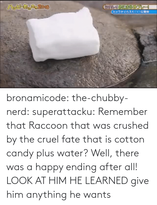 Ending: bronamicode:  the-chubby-nerd:  superattacku:    Remember that Raccoon that was crushed by the cruel fate that is cotton candy plus water? Well, there was a happy ending after all!     LOOK AT HIM HE LEARNED   give him anything he wants
