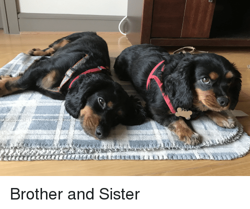 Brother, Sister, and And: Brother and Sister