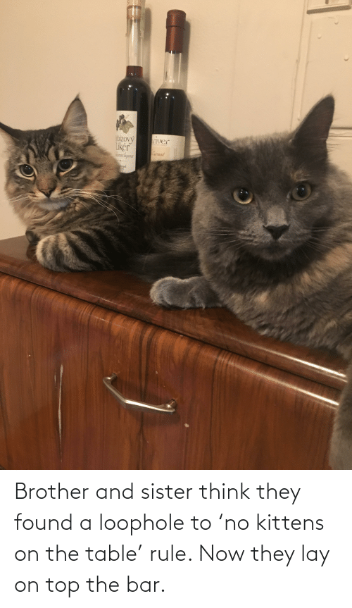 On The Table: Brother and sister think they found a loophole to 'no kittens on the table' rule. Now they lay on top the bar.