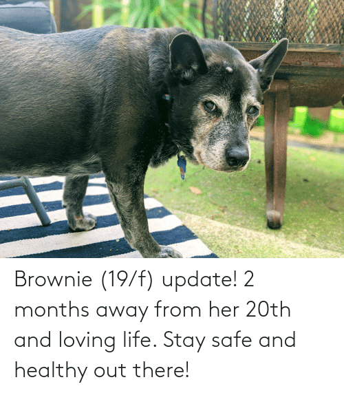 Brownie: Brownie (19/f) update! 2 months away from her 20th and loving life. Stay safe and healthy out there!