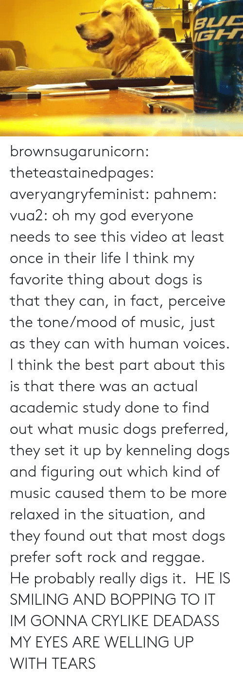 digs: brownsugarunicorn:  theteastainedpages:  averyangryfeminist:  pahnem:  vua2:  oh my god  everyone needs to see this video at least once in their life  I think my favorite thing about dogs is that they can, in fact, perceive the tone/mood of music, just as they can with human voices.  I think the best part about this is that there was an actual academic study done to find out what music dogs preferred, they set it up by kenneling dogs and figuring out which kind of music caused them to be more relaxed in the situation, and they found out that most dogs prefer soft rock and reggae.  He probably really digs it.    HE IS SMILING AND BOPPING TO IT IM GONNA CRYLIKE DEADASS MY EYES ARE WELLING UP WITH TEARS