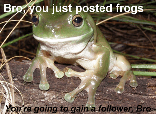 Frogs, Gain, and Bro: Broyou just posted frogs  Youre going to gain a follower Bro