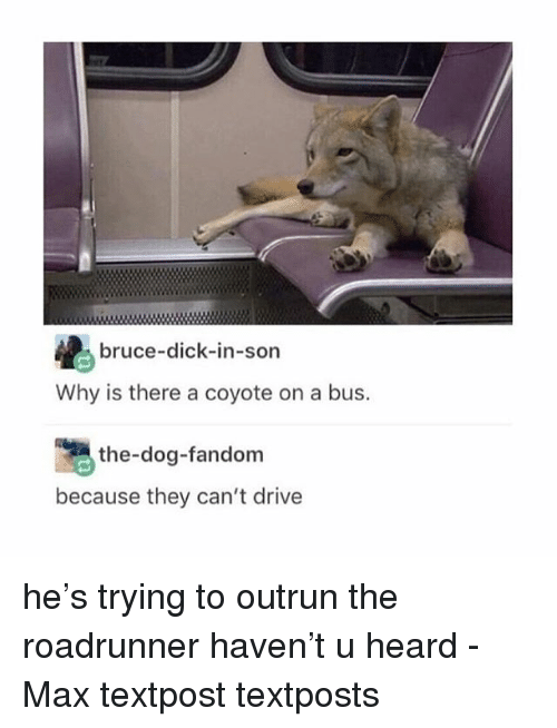 Textposts: bruce-dick-in-son  Why is there a coyote on a bus.  the-dog-fandom  because they can't drive he's trying to outrun the roadrunner haven't u heard - Max textpost textposts