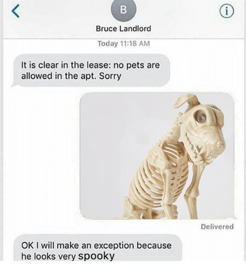 Sorry, Pets, and Today: Bruce Landlord  Today 11:18 AM  It is clear in the lease: no pets are  allowed in the apt. Sorry  Delivered  OK I will make an exception because  he looks very spooky