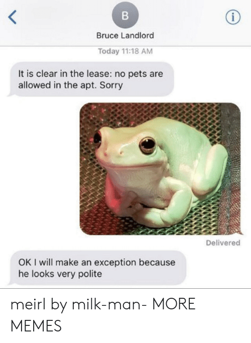 Polite: Bruce Landlord  Today 11:18 AM  It is clear in the lease: no pets are  allowed in the apt. Sorry  Delivered  OK I will make an exception because  he looks very polite meirl by milk-man- MORE MEMES