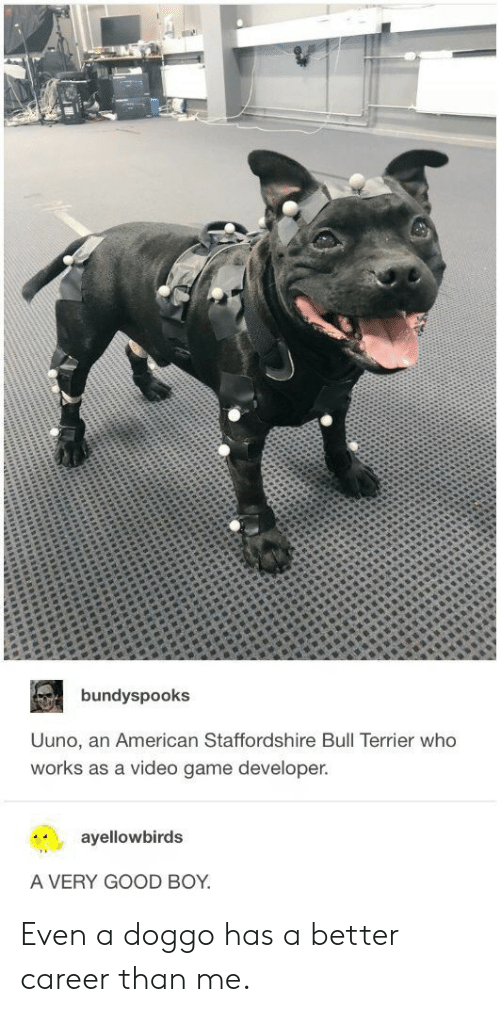 Game Developer: bundyspooks  Uuno, an American Staffordshire Bull Terrier who  works as a video game developer.  ayellowbirds  A VERY GOOD BOY Even a doggo has a better career than me.