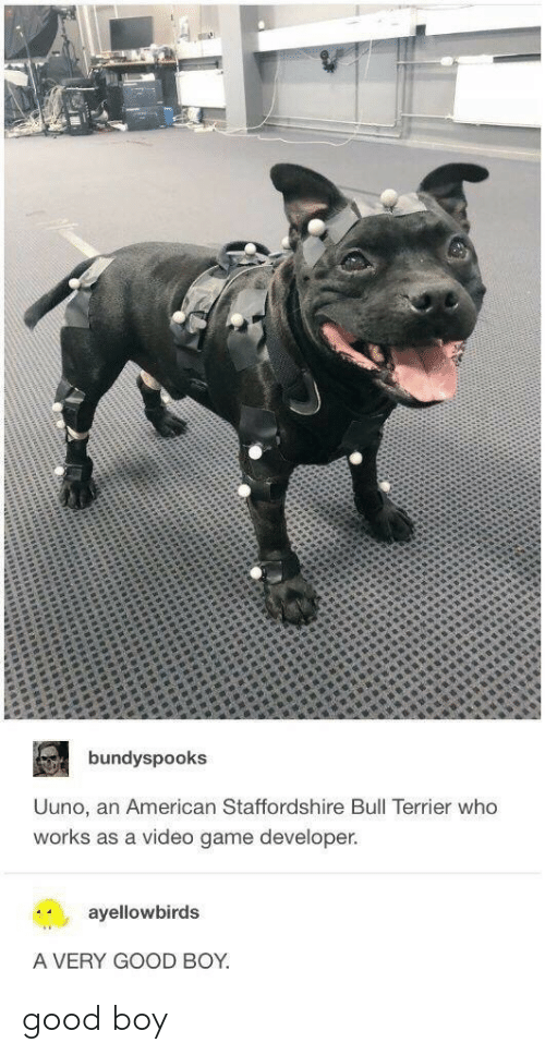 Game Developer: bundyspooks  Uuno, an American Staffordshire Bull Terrier who  works as a video game developer.  ayellowbirds  A VERY GOOD BOY good boy