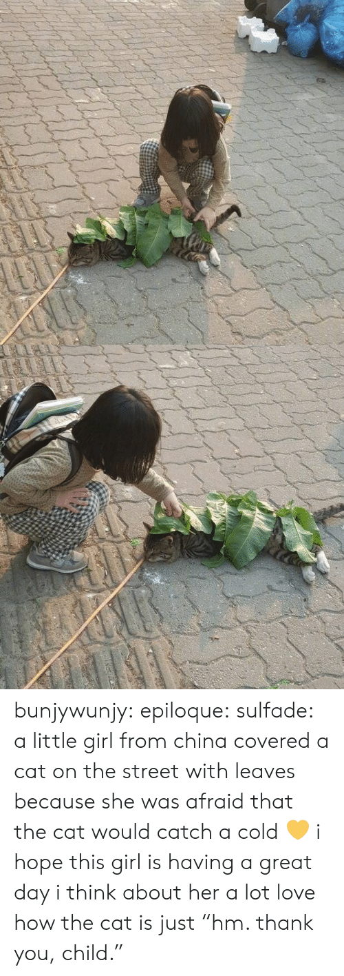 """Love, Tumblr, and China: bunjywunjy:  epiloque:  sulfade: a little girl from china covered a cat on the street with leaves because she was afraid that the cat would catch a cold 💛  i hope this girl is having a great day i think about her a lot   love how the cat is just """"hm. thank you, child."""""""