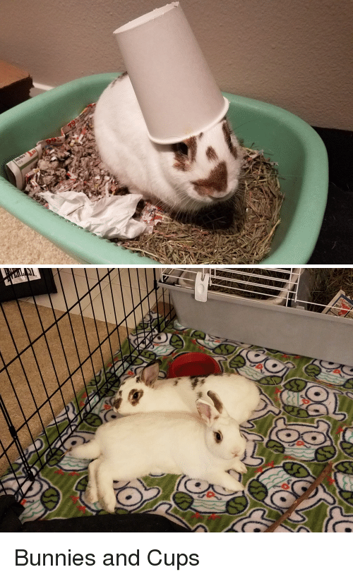Bunnies, Cups, and And: Bunnies and Cups