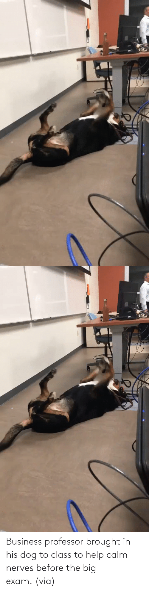 Imgur Com: Business professor brought in his dog to class to help calm nerves before the big exam. (via)