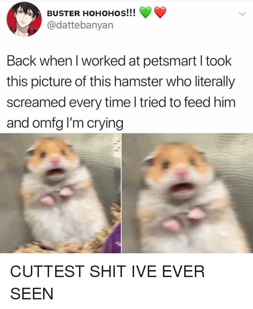 Crying, Shit, and Girl: BUSTER HOHOHOs!!!  @dattebanyan  Back when I worked at petsmart I took  this picture of this hamster who literally  screamed every time l tried to feed him  and omfg I'm crying CUTTEST SHIT IVE EVER SEEN