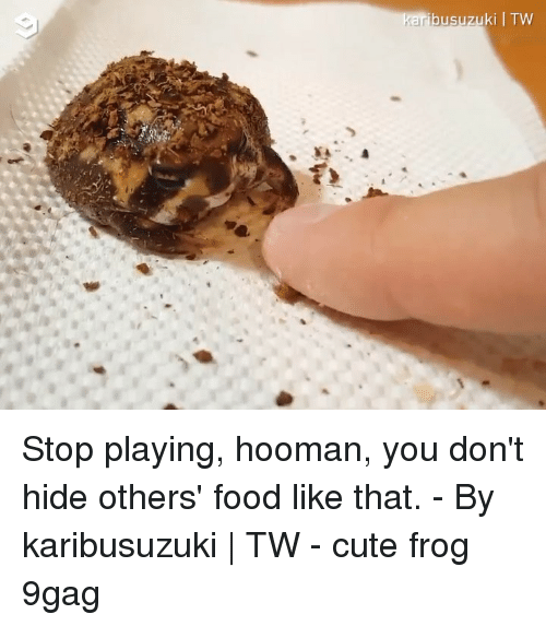 9gag, Cute, and Food: busuzuki | TW Stop playing, hooman, you don't hide others' food like that. - By karibusuzuki | TW - cute frog 9gag