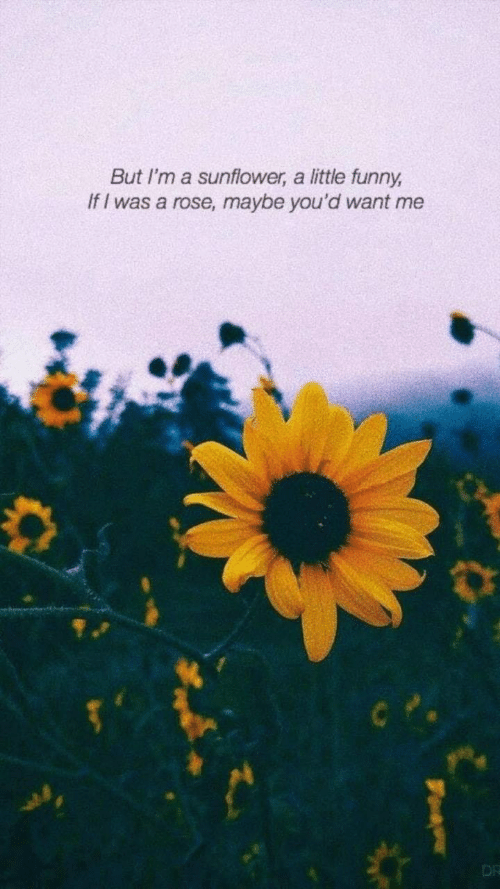 A Rose: But I'm a sunflower, a little funny  If I was a rose, maybe you'd want me  DR