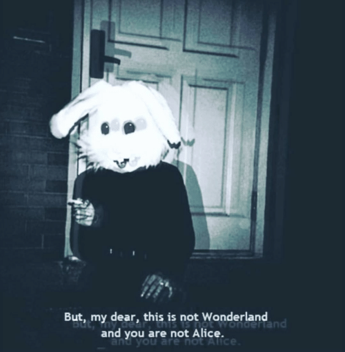 Alice, Wonderland, and You: But, my dear, this is not Wonderland  and you are not Alicendertand  and you are not Alice